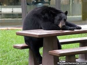 Merveilleux Best Reader Submitted Photo Nominee: Black Bear At Picnic Table
