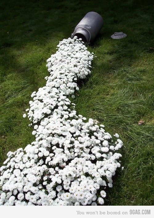 If I could grow anything or garden, I would love to do this, 'Spilled Milk'
