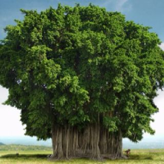 Gorgeous tree!