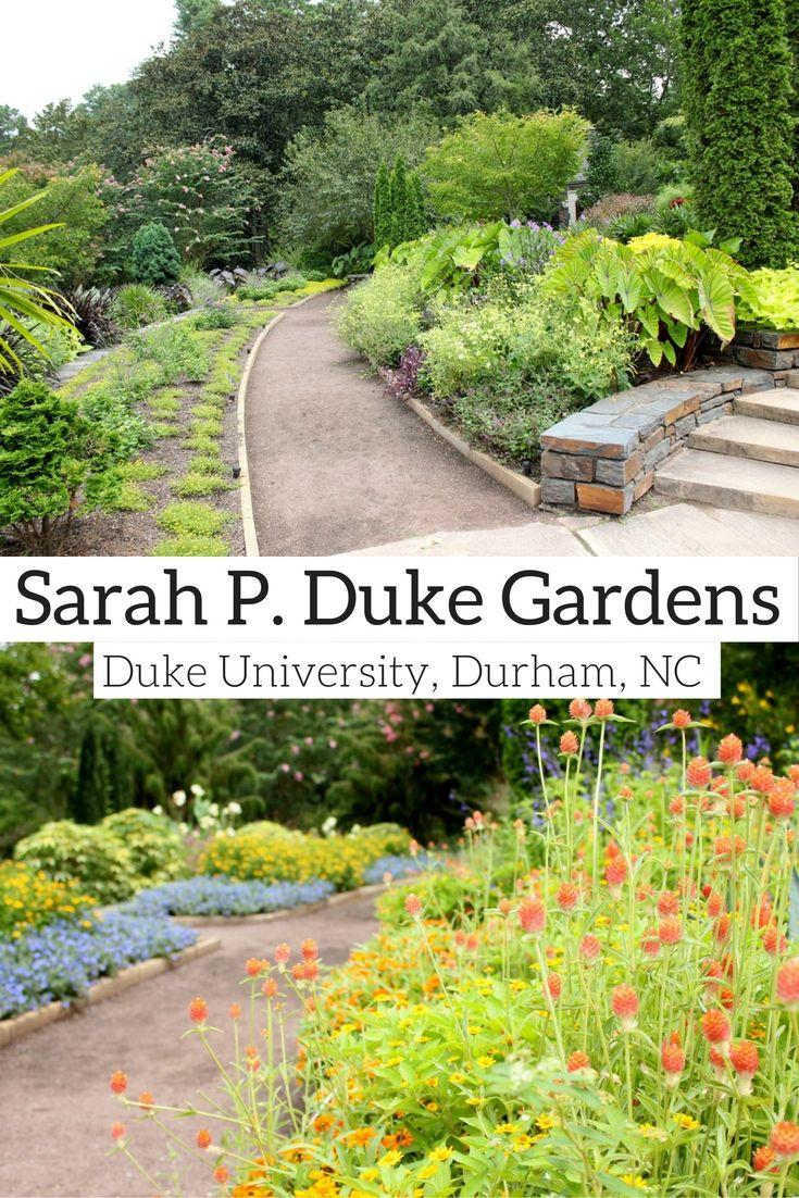Visiting The Sarah P Duke Gardens 23