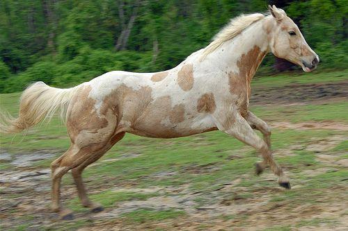 Paint Quarter Horses For Sale In Mississippi