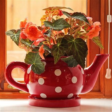Teapot And Saucer Planter Flowers Tea Pots Planters Beautiful Bouquet Of