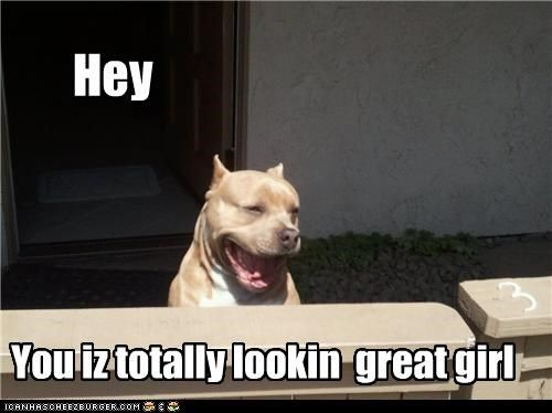 Cute Pitbull Pictures with Captions pliment