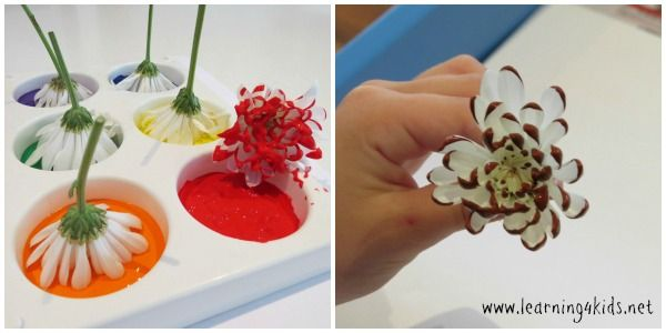 A lovely art activity when your teaching environmental concepts. From www.learning4kids.com