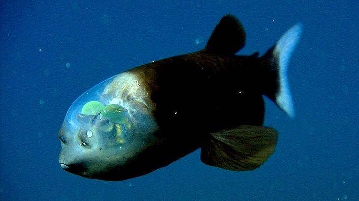 Pesci strani: la top 10 degli abissi