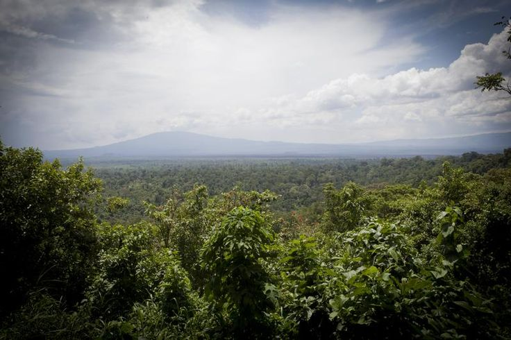Virunga National Park in DRC - View of the Virunga National Park from the ICCN (Institut Congolais pour la Conservation de la Nature) headquarter in Rumangabo. © Greenpeace / Jan-Joseph Stok