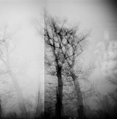 "Rachel Haynes ""A Dream of Trees"" - multiple exposure (not entirely sure what your are looking at)."