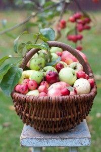 Kosz jabłek