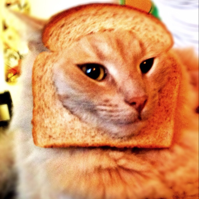 Cat Makes Bread Good Thing