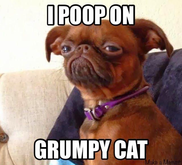 Grumpy looking dogs