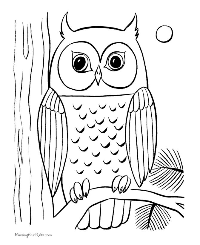 Marvelous Free Printable Owl Coloring Pages