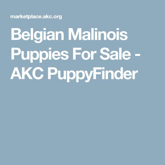 Belgian Malinois Puppies For Sale - AKC PuppyFinder