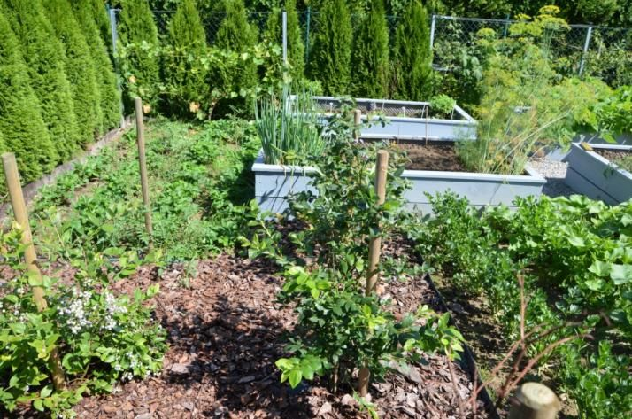 Vegetable Garden Design Ideas malkul modern garden