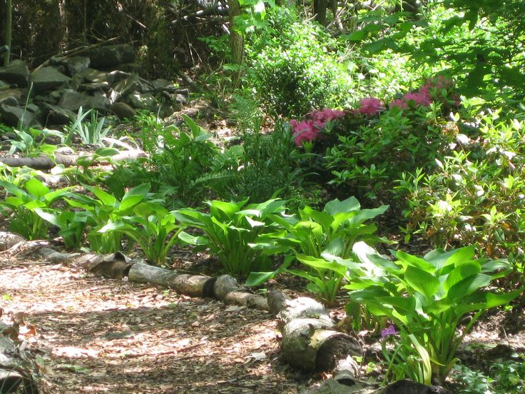 71 Best Ideas About Woodland Gardens On Pinterest