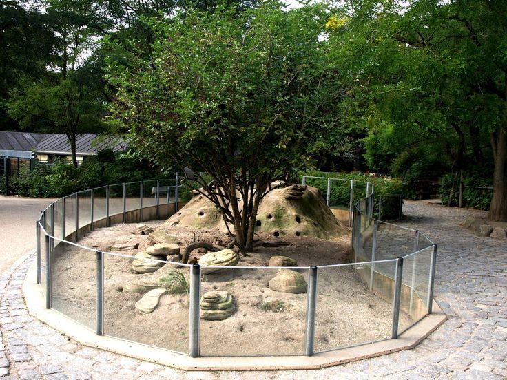copenhagen zoo | Copenhagen Zoo - Mongoose exhibit » Zoo København Gallery
