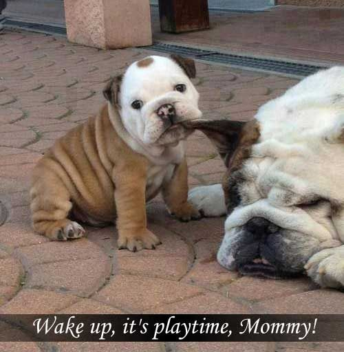 Wake up, it's playtime, Mommy!