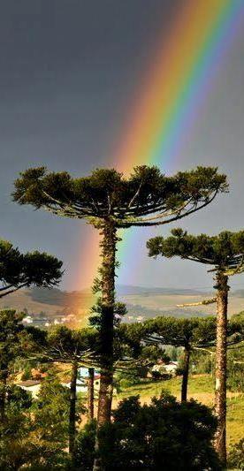 Brasil...  Região da Serra de Santa Catarina, com seus pinheirais e um lindo arco-íris.