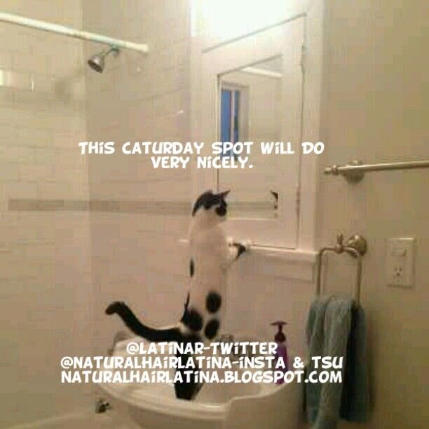 Good Morning It 39 S Caturday Funny Cute Pets Animals Adorable Bathroom Memes Captions