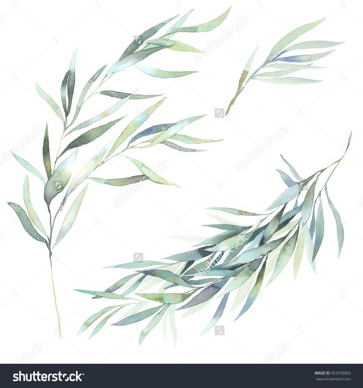 Watercolor leaves branch set. Hand painted eucalyptus elements isolated on white background. Artistic clip art
