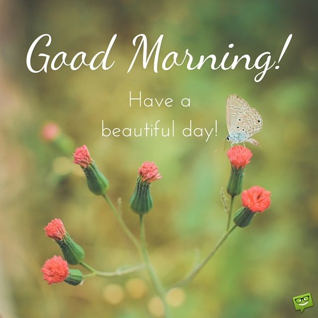 Good Morning Beautiful Have A Good Day : Best images about good morning on pinterest