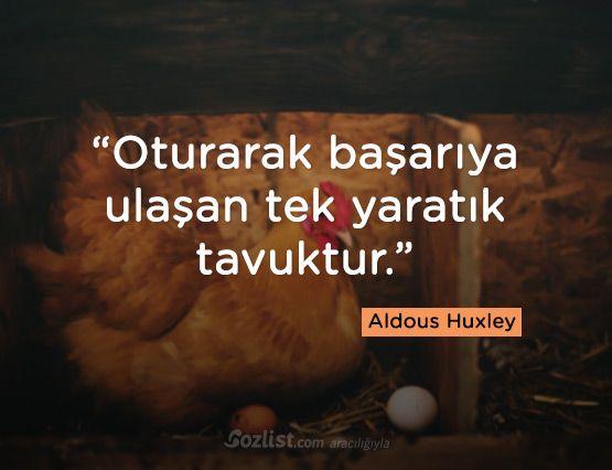 ➰Oturaraq uğura nail olan tək varlıq toyuqdur. #Aldous_Huxley