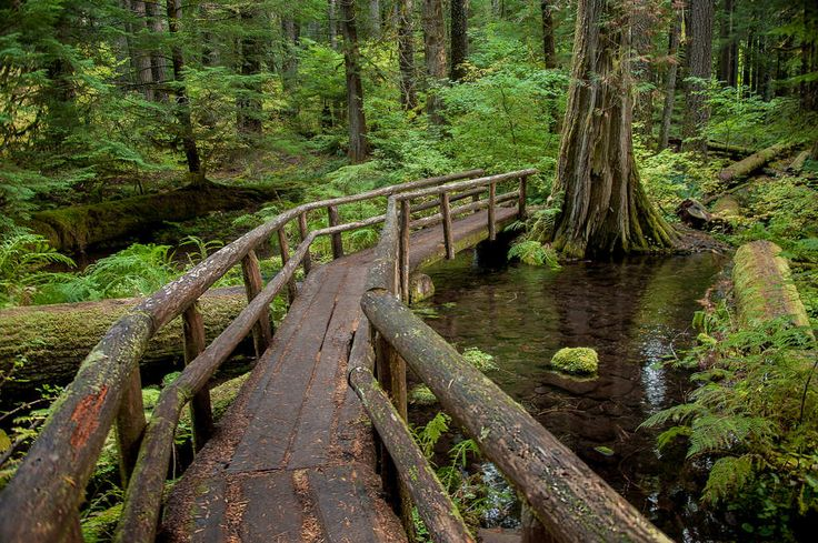 Log Bridge on the McKenzie River Trail, Oregon ~ Love the clarity...I feel like I could walk right into this picture!