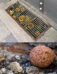 Guerilla gardening... Plant a seed bomb. I love the idea of guerilla gardening - would love to start doing it!