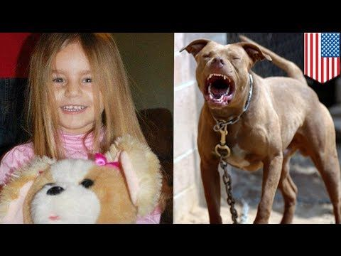 Pitbull attack: 4 year old girl dies after being mauled by vicious dog 3...