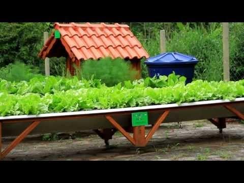 Deu Horta Na Telha - Agrônomo Marcos Victorino - YouTube