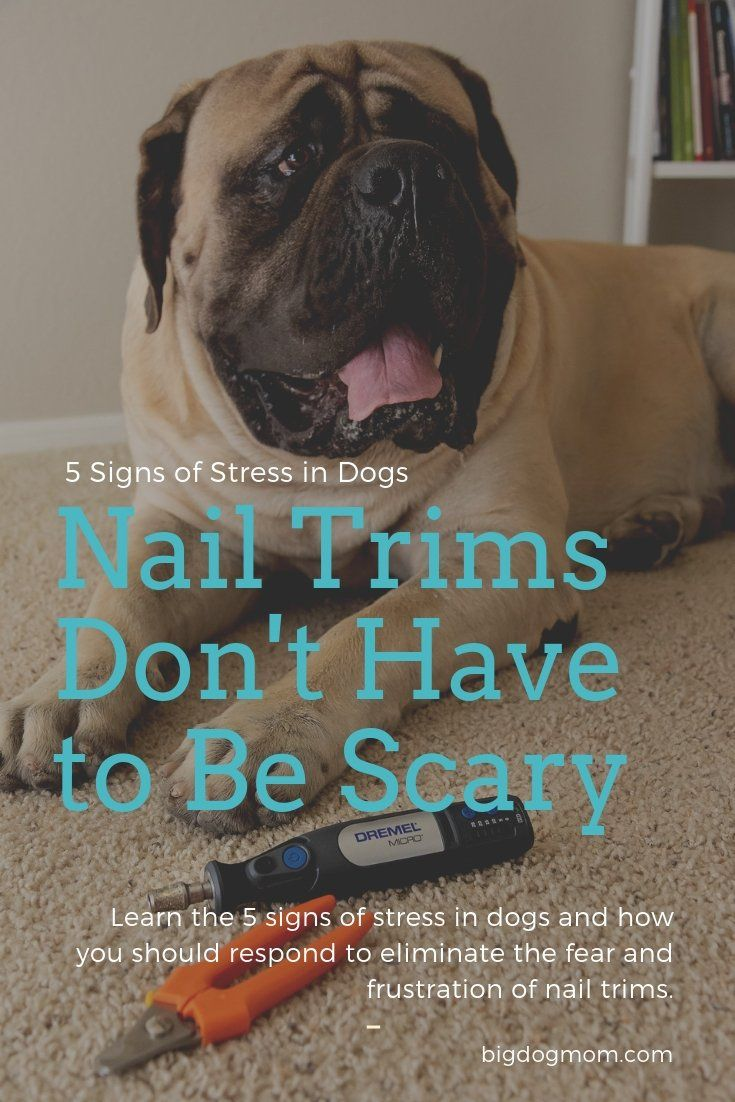 5 Subtle Signs Of Stress In Dogs Take The Fear Out Of Nail Trims