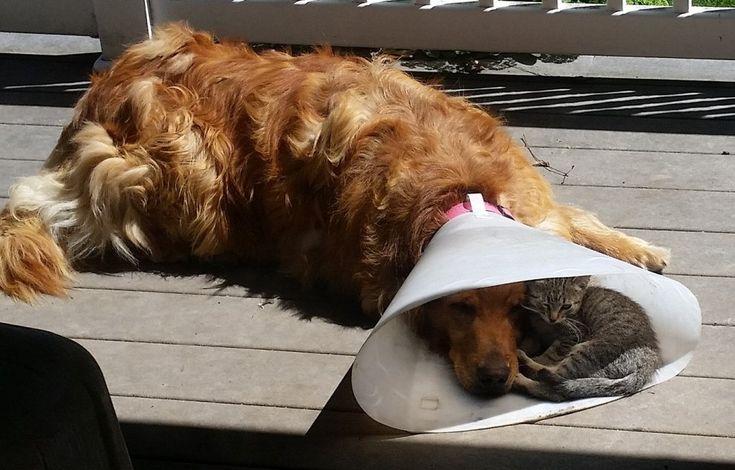 """""""E' bello avere un compagno quando sei giù"""": il gatto consola il cane depresso"""