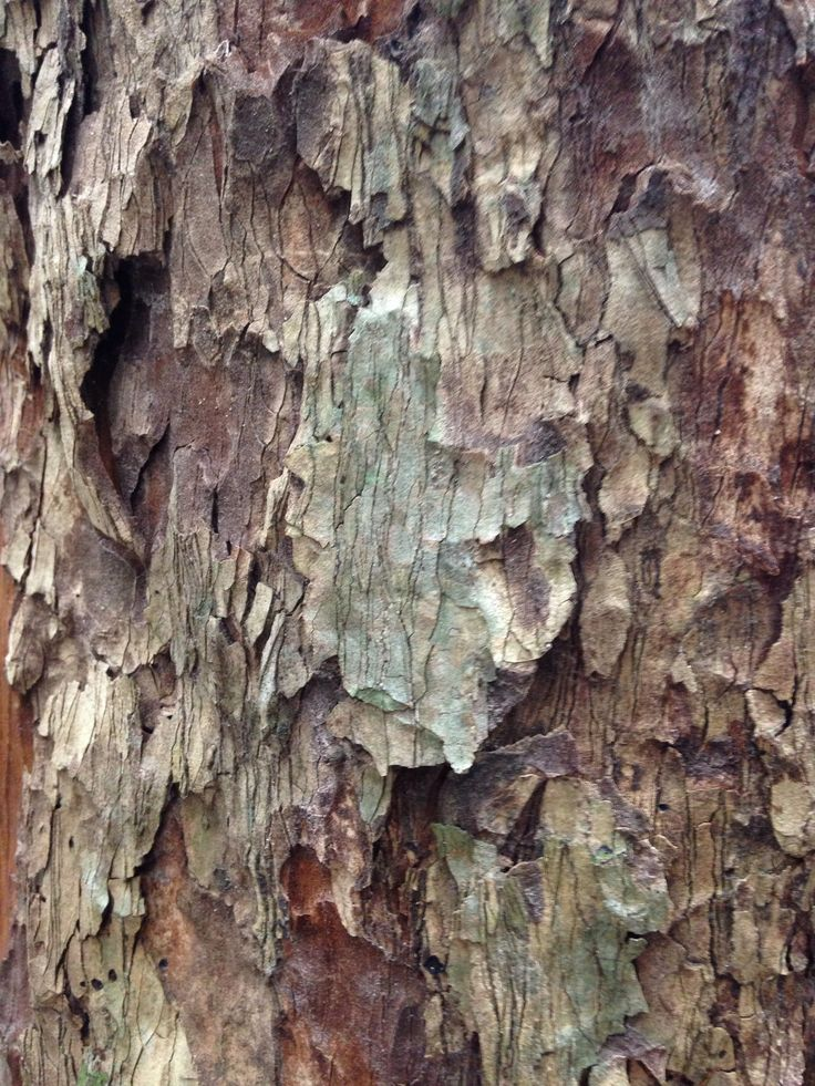 I really liked the colours and the textures in this bark.