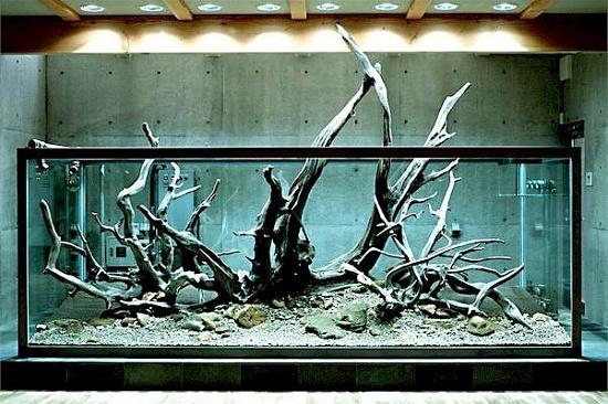Takashi Amano S Personal Tank Hardscape Tanks Aquarium