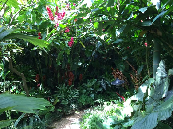 Tropical shaded path