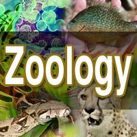 Animal & Acqua Life Zoology Science Fair Projects