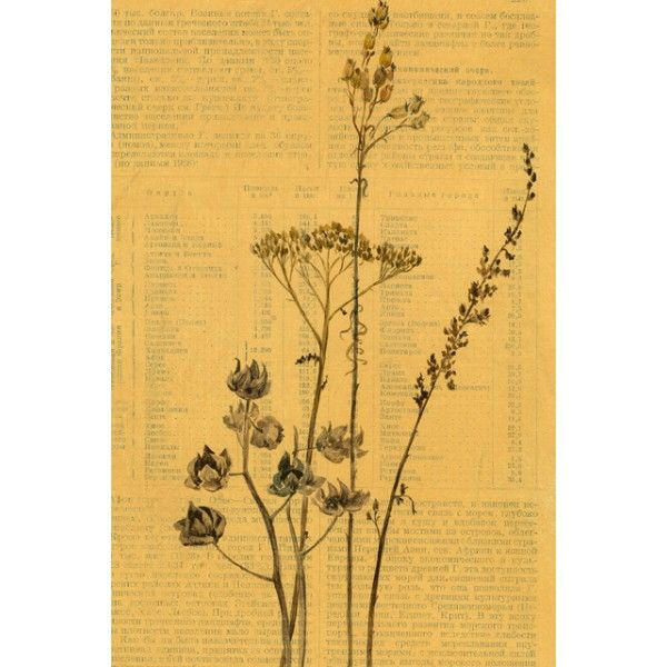 Wilting. Milfoil - Postcards, Pages of an old encyclopedia