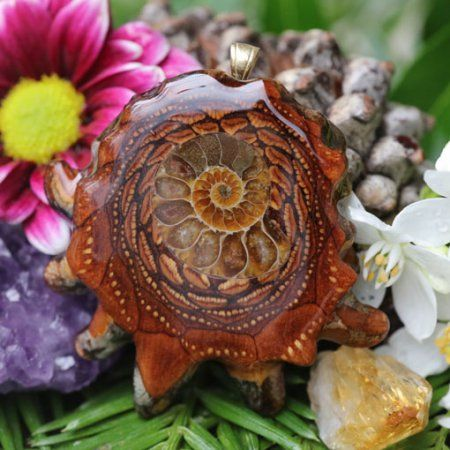 Ammonite | Třetí oko Pinecones