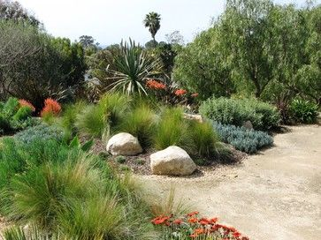 drought tolerant water wise plant material Pinterest