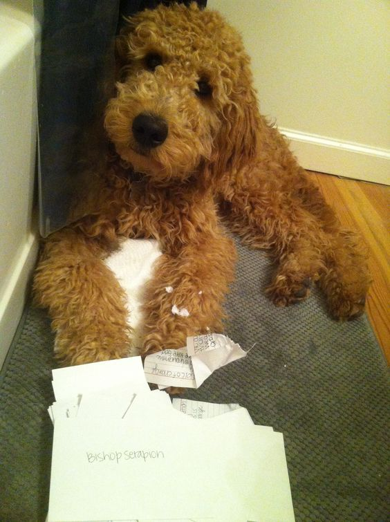'I thought the Postman put this through for me' - Funny Doodle Dog