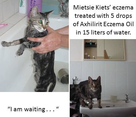 Axhilirit Eczema Oil sorted Mietsie's dry and itchy skin condition out in a flash.  For more info: http://www.healing-oil.co.za/product-info/axhilirit-eczema-oil-for-pets