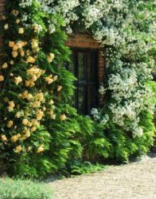 gardens in Norfolk, English Garden