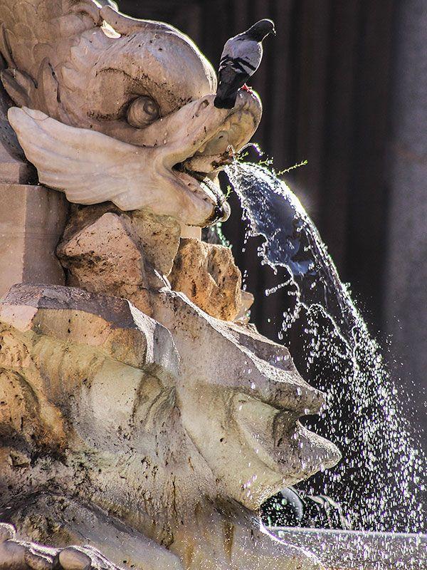 Dophin & Dove The Fontana del Pantheon is fed by the Aqua Vergine. Giacomo della Porta designed the fountain 1575.  #italy #rome #fontaine #fontanadelpantheon #piazzadellarotonda #pantheon #aquavergine  #giacomedellaporta #travel #latium