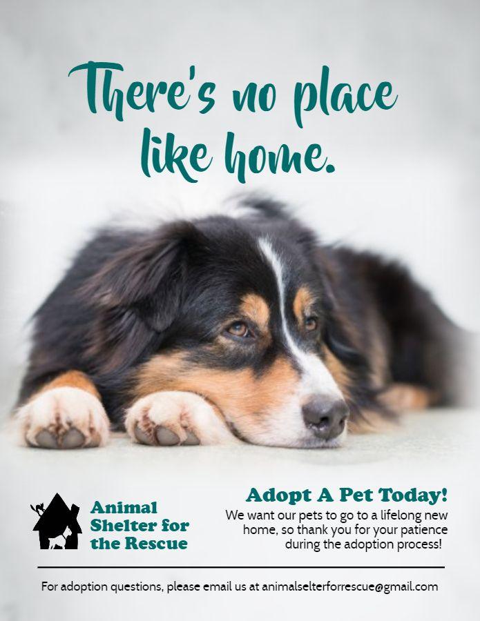 Adopt A Pet Animal Rights Poster Template Pet Adoption Event