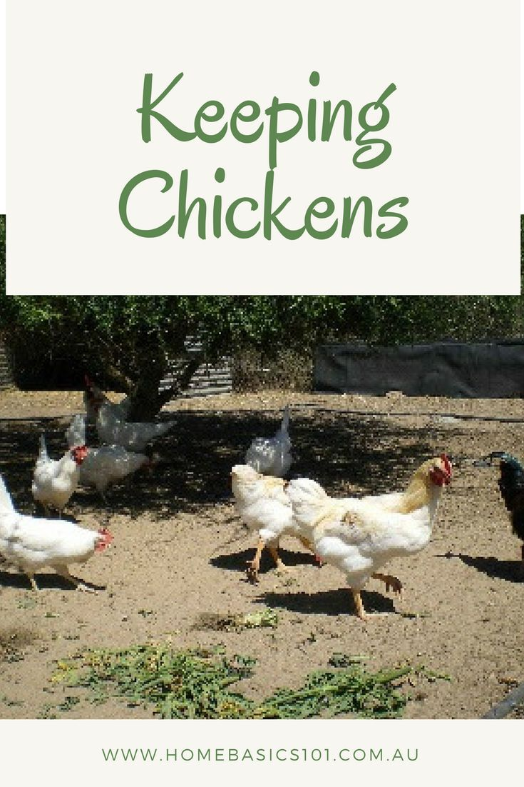 Keeping Chickens;  My First 6 Months    Back in August 2017 I  wrote about research I had done into keeping chickens (here).  Well, 6  months down the track I am absolutely loving our girls and am so happy I took  the plunge and just went for it.      #Garden