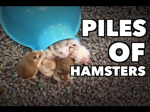 Small Pets Market » Supplies For Rabbits, Hamsters & More