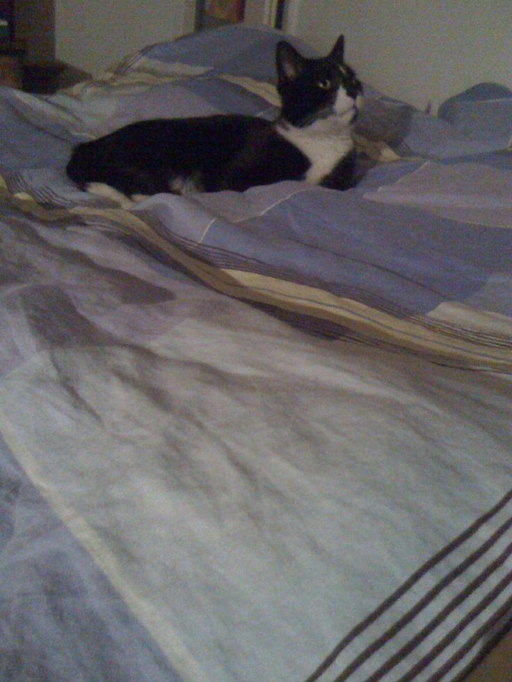Najlepsze miejsce do spania dla Jazza? Łóżko i czysta pościel - oczywiście ;)