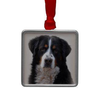 Bernese Mountain dog beautiful photo, gift Ornament