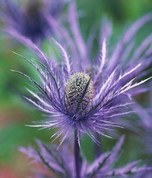 Find This Pin And More On Flower Scents Purple Names