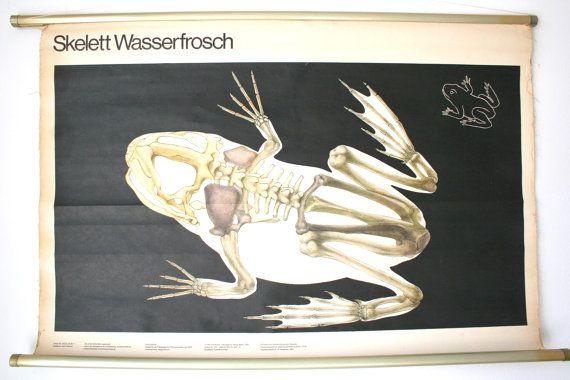 Vintage East German Science Classroom Poster Published by Volk und Wissen Volseigener Verlag Berlin  Silkscreened on paper with canvas backing,