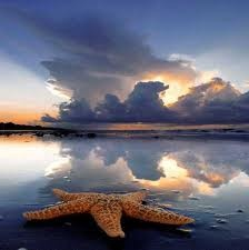 Starfish at dusk on the beach  #sunset #landscape photography #ocean